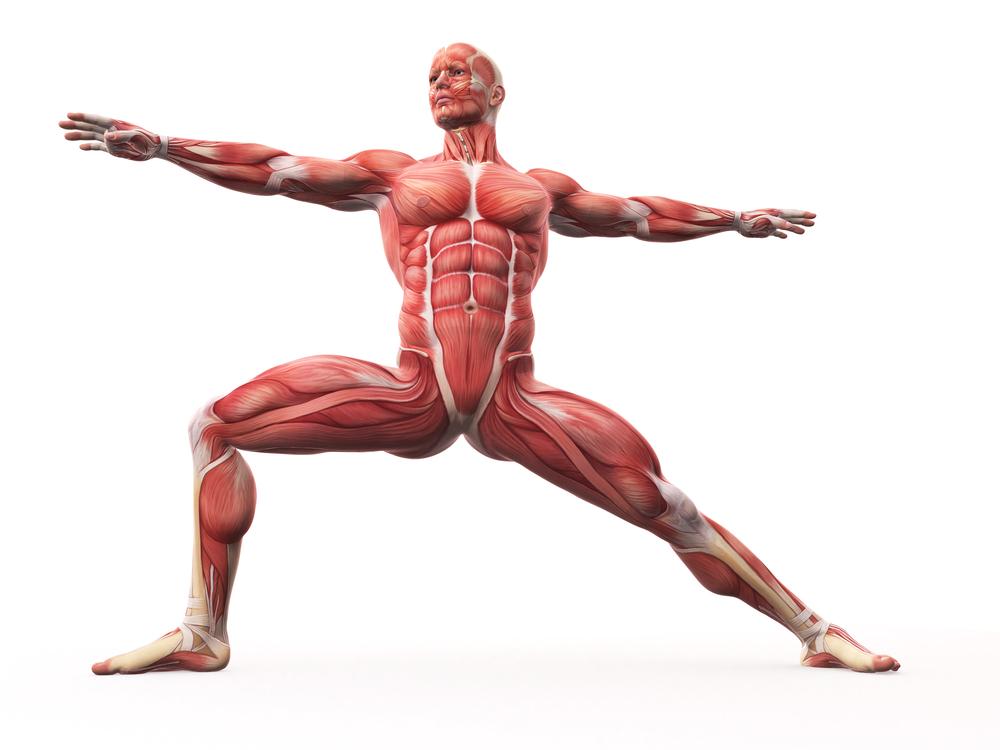 筋肉はどのように構成されている?</