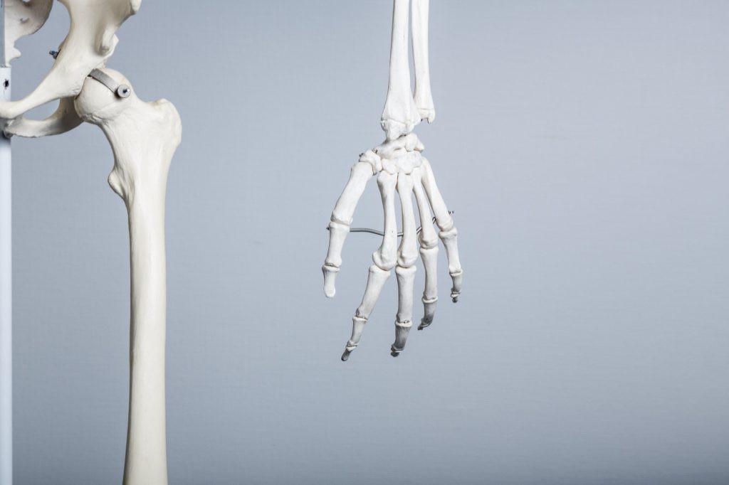 骨の太さって筋肉のつきやすさと関係ある?