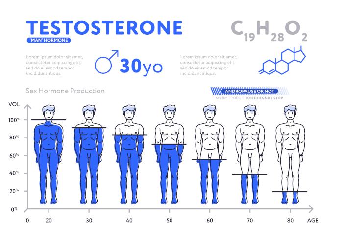 テストステロンは年齢と共に減少