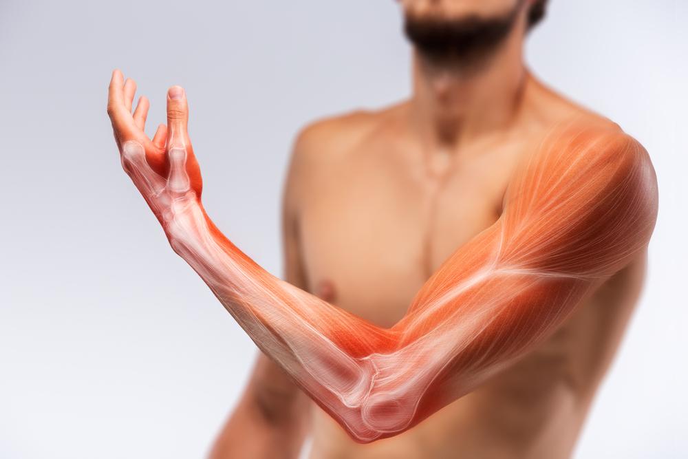 骨密度と筋力の相関性とは