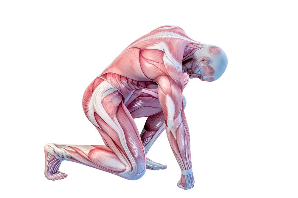 動かしやすい筋肉と動かしにくい筋肉の違い
