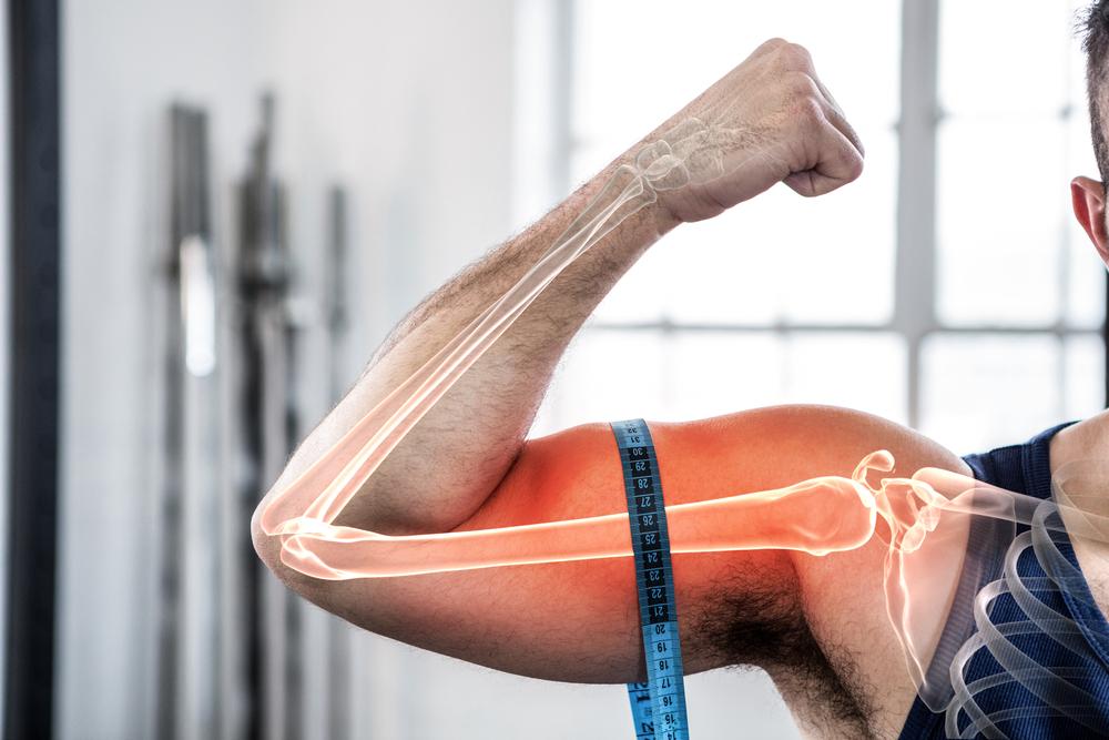 骨・筋肉・脂肪の成長には共通点が多い