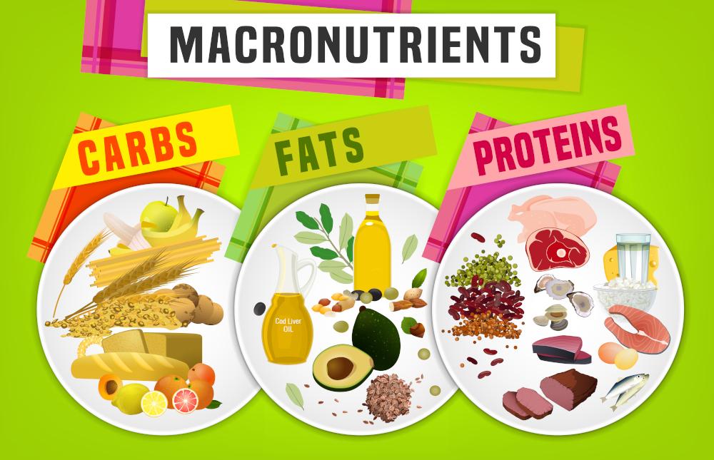 3大栄養素(マクロ栄養素)